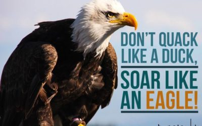 Network Marketing Eagles – Soaring To Success